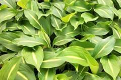 春季该如何养护观叶植物?