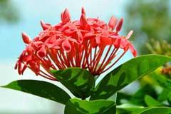 花卉春季出室的注意事项有哪些