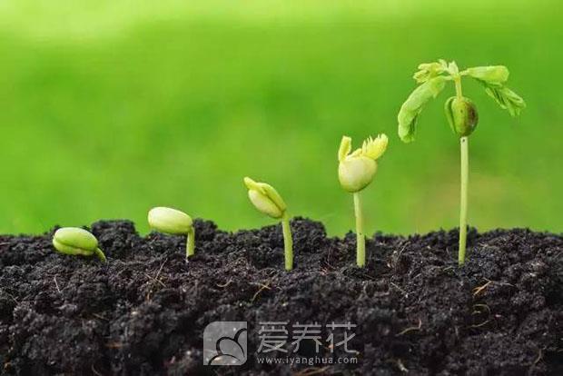 喜光花卉图片