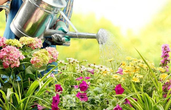 花卉浇水方法图片
