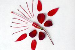 [从零开始学养花]科普达人:认识花朵的结构