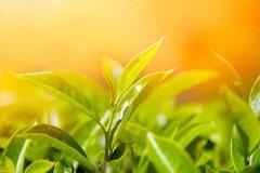 [从零开始学养花]种植花卉植物该如何控制光照