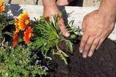 家里养花怎么正确施肥?有机肥与无机肥,哪一种更好?