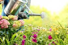 家养花卉都是浇水浇死的,总结花卉浇水6大要点方法