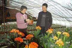 辽阳:大河南镇观赏花卉走俏市场