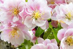 让花卉枝繁叶茂,浇花水中加这3种日常用品
