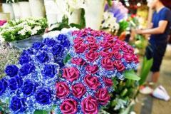 福建花卉苗木产值突破640亿 城市鲜花消费渐入佳境