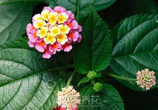 常见的有毒花卉图片