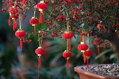 冬天养花技巧 做好准备怎样让花儿在春节盛开
