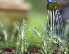 [从零开始学养花]如何营造花卉良好的生长环境:足够的水分