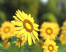 [从零开始学养花]如何营造花卉良好的生长环境:花卉生长最适宜的温度是多少