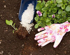 [从零开始学养花]如何营造花卉良好的生长环境:合适的土壤