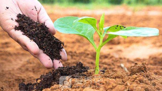 土壤盐碱化的防治图片