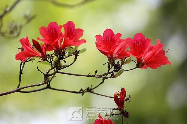 花卉的分类方法图片