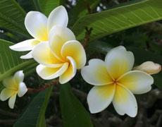花卉的分类方法