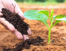 家庭养花如何防治土壤盐碱化板结